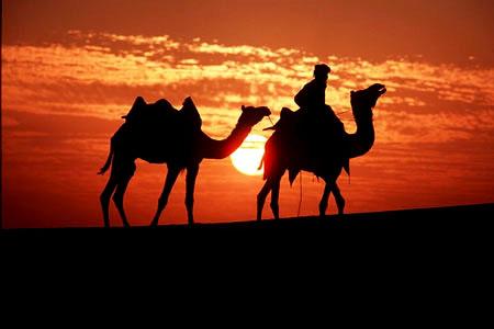 http://abufahmiabdullah.files.wordpress.com/2010/05/camels_desert.jpg